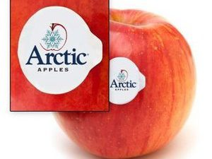The New 'Arctic' Apple – It's GMO'd But Not Labeled As Such